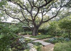 Specimen Trees: Are They Worth It?: Gardenista