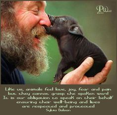 Like us, animals feel love, joy, fear and pain but they cannot grasp the spoken word.  It is our obligation to speak on their behalf  ensuring their well-being and lives are respected and protected.  ~ Sylvia Dolson ~