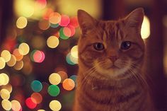 I'm thinking something like this with binx for Christmas cards this year