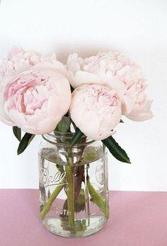 Trendy Flowers Arrangements In Mason Jars Peonies Ideas Simple Flowers, Colorful Roses, Beautiful Flowers, Fresh Flowers, Exotic Flowers, Pink Mason Jars, Mason Jar Flowers, Blush Peonies, Purple Peonies