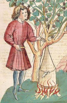 Konrad von Megenberg Das Buch der Natur — Hagenau - Werkstatt Diebold Lauber, um 1442-1448? Cod. Pal. germ. 300 Folio 251r