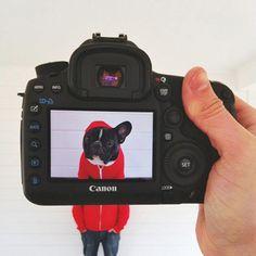 Petheadz: Fusionando mascotas con sus dueños en la fotografía de Zach Rose | TodoGraphicDesign