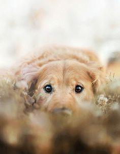 .sweet gentle eyes...