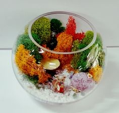 엔에스꽃자재 스칸디아모스 (500g) Inspiration Artistique, Moss Art, Stone Art, Bonsai, Terrarium, Projects To Try, Arts And Crafts, Prints, Handmade