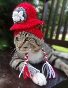Hats for cats, no explanation needed.