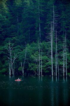 Peaceful Kayaking   Let's Paddle! #kayak #kayaker #kayaking