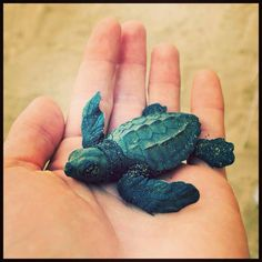 Turtle release - The Westin Lagunamar Ocean Resort Villas & Spa #svnlife #cancun