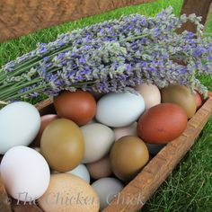 A hen does not necessarily lay an egg every day.