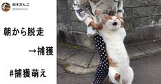 躍動感溢れる猫の捕われっぷりに胸キュン!