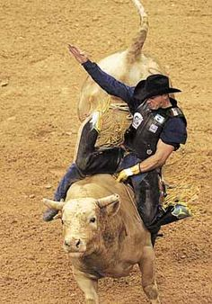 Bodacious: Most Dangerous Bull Ever. His offspring still ... Professional Bull Riders Adriano Moraes