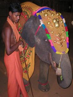 elephant head dresses on the west coast of India with a beautiful ceremonial head-dress