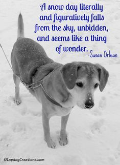 """""""A snow day literally and figuratively falls from the sky, unbidden, and seems like a thing of wonder.""""  #SusanOrlean Dog Mom 