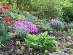 Rock garden in shade Hosta,creeping phlox,and forget-me-nots. https://www.etsy.com/shop/GreenLeafGardens?ref=hdr
