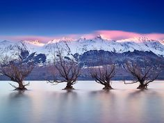 Picture of willow trees in Lake Wakatipu, New Zealand Photograph by Paul Reiffer, Naational Geographic Your Shot