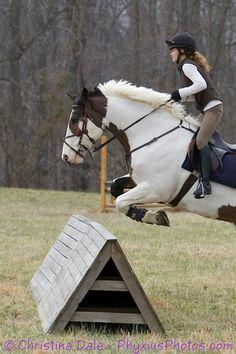 #horse #pinto #eventing #horsebackriding #girl #woman #sports