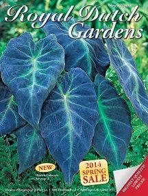Crownvetch - Coronilla varia: DEFINITELY need this one. 1 plant to 4 sq. feet.