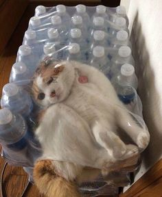 Why do i always find cats in weird places?