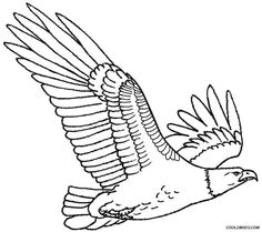 Printable Bald Eagle Coloring Pages For Kids Cool2bKids Birds
