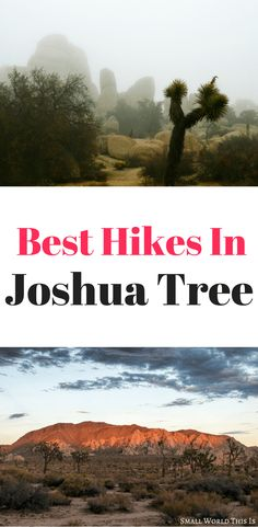 Want to experience the stunning beauty of one of California's most scenic deserts? Here's a complete guide to the best hikes in Joshua Tree National Park, from easy to difficult, plus where to eat and sleep #joshuatree #california #travel