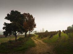 Raventós i Blanc. Vineyard, Spanish, Country Roads, Image, World, Farmhouse, Woods, Naturaleza, White People