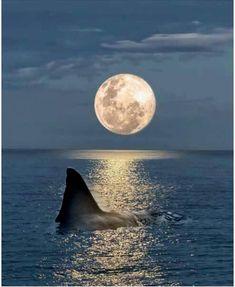 Save The Sharks, All Sharks, Sea Creatures Drawing, Proxima Midnight, Jaws Movie, Shark Bait, Big Teeth, Shark Tattoos, Shoot The Moon