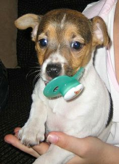 Oh, Baby! 15 Dogs With Their Binkies