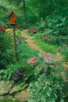 Shady summer garden with path and handmade cedar birdhouse