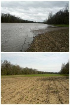 The Wabash River brings water into this field from time to time.  These pictures were taken from the same spot exactly one week apart.  Sometime during that week all this water receeded.