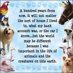 A hundred years from now, it will not matter the sort of house I live in, what my bank account was, or the car I drove. but the world may be different because I was important in the life of animals and the creatures on this earth. Vet Med, A Hundred Years, Network For Good, Veterinary Medicine, Veterinary Technician, Veterinary Receptionist, Animal Cruelty, Animal Quotes, Dog Quotes