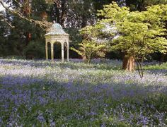 Bluebells at Capesthorne Hall by Margaret Robertson©