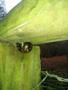 My finds- snail cache