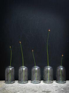 Stil Inspiration - Page 139 of 198 - Ikebana, Flower Vases, Flower Arrangements, The Bell Jar, Green Architecture, Mason Jar Lamp, Glass Collection, Wabi Sabi, Decoration