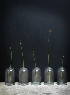 Poetic Symmetry - para colocar no armário baixo da sala, perto da tv ou da mesa