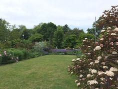 Botanical Gardens, Perennials, Stepping Stones, Toronto, Outdoor Decor, Plants, Stair Risers, Plant, Perennial
