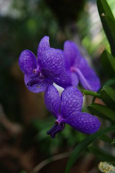 Orchidee by cranknfurther, via Flickr