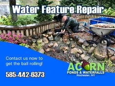 Acorn Ponds & Waterfalls specializes in the design, maintenance & repair of Koi ponds & water features and we offer solutions to almost any problem you might be having with your water garden Pond Maintenance, Rochester New York, Pond Waterfall, Pond Water Features, Finger Lakes, Water Garden, Ponds, Acorn, Waterfalls