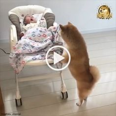 Pawsworld is the portal to your little cute friends world. Funny Animal Videos, Cute Funny Animals, Videos Funny, Cute Cats, Humor Videos, Funny Babies, Funny Dogs, Cute Babies, Funny Humor