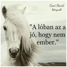 Equestrian Quotes, Horse Riding, Horses, Animals, Life, Animales, Animaux, Animal, Animais