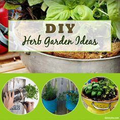 5 DIY Herb Garden Ideas--I love growing my own herbs!  It is so convenient and saves me lots of money :)  #herb #garden #DIY #skinnyms