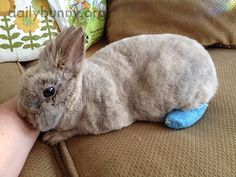 Bunny recovers from an injury sustained by overzealous thumping - April 8, 2015 - More at today's Daily Bunny post: http://dailybunny.org/2015/04/08/bunny-recovers-from-an-injury-sustained-by-overzealous-thumping/ !