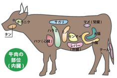 牛肉(内蔵)の部位