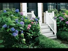 How to Choose and Plant Hydrangeas - This Old House - YouTube