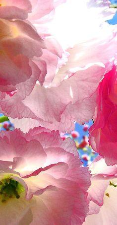 The Beauty of Spring Beauté du Printemps