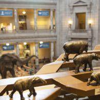 National Natural History Museum - #smithsonianfamily