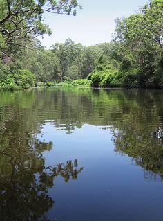 Lane Cove National Park, Sydney, Australia   Ewen Charlton