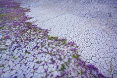 The Badlands - Guy Tal Captures Utah Deserts Exploding with Wild Flowers Desert Flowers, Colorful Flowers, Wild Flowers, Beautiful Flowers, Utah, Image F, Photo Voyage, Colorado Plateau, Desert Photography