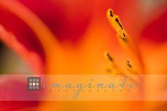 Macro Photography  ©Imaginate Photography