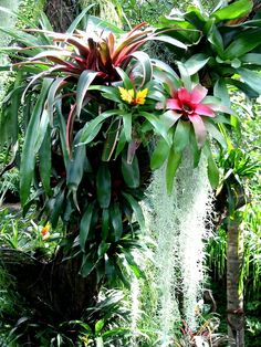 Tropical - bromeliads.