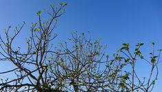 Life, love and photograph: Campo. Flores. E aquela Paz...