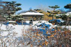 Winter Garden Design: Plants for a Four-Season Landscape - Green Homes - Natural Home & Garden